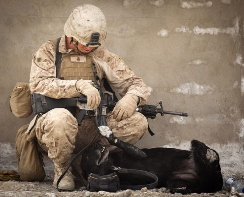 soldier playing with working dog